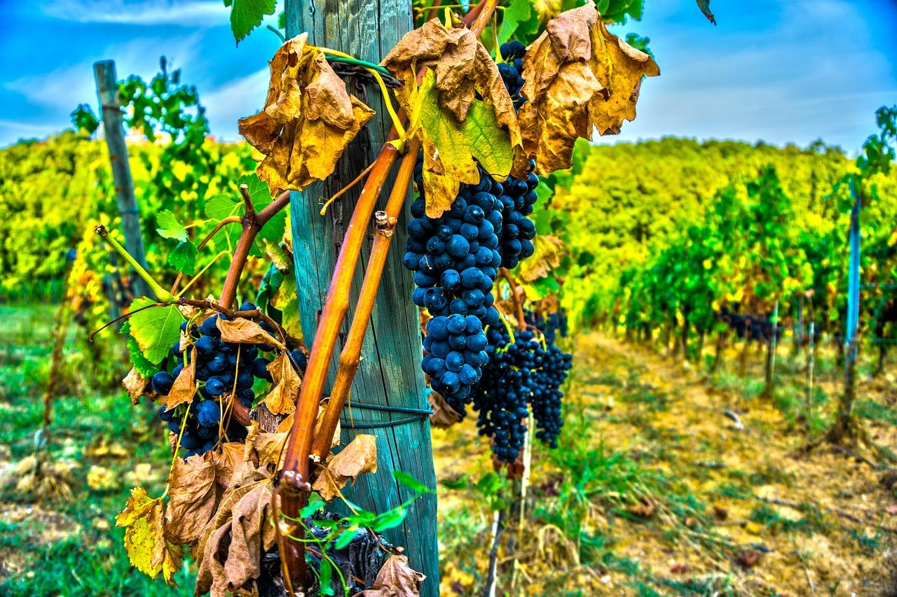 Weinreisen in Deutschland