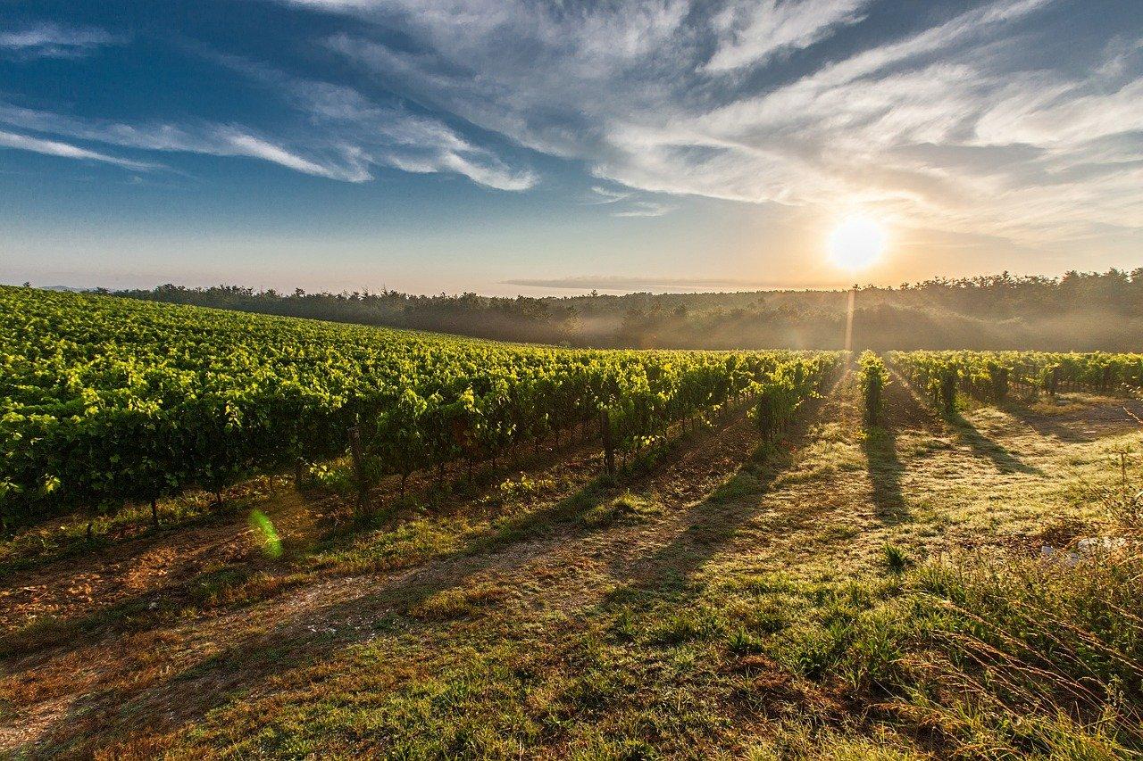 Weinbau in Deutschland